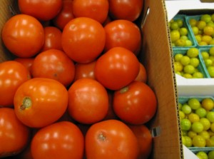 Tomatoes from Benton Berries farm in Penn Yan N.Y.