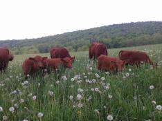 Flaca Vaca Farm