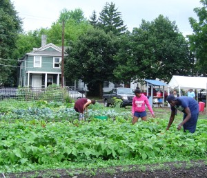 A community garden in Binghamton, NY